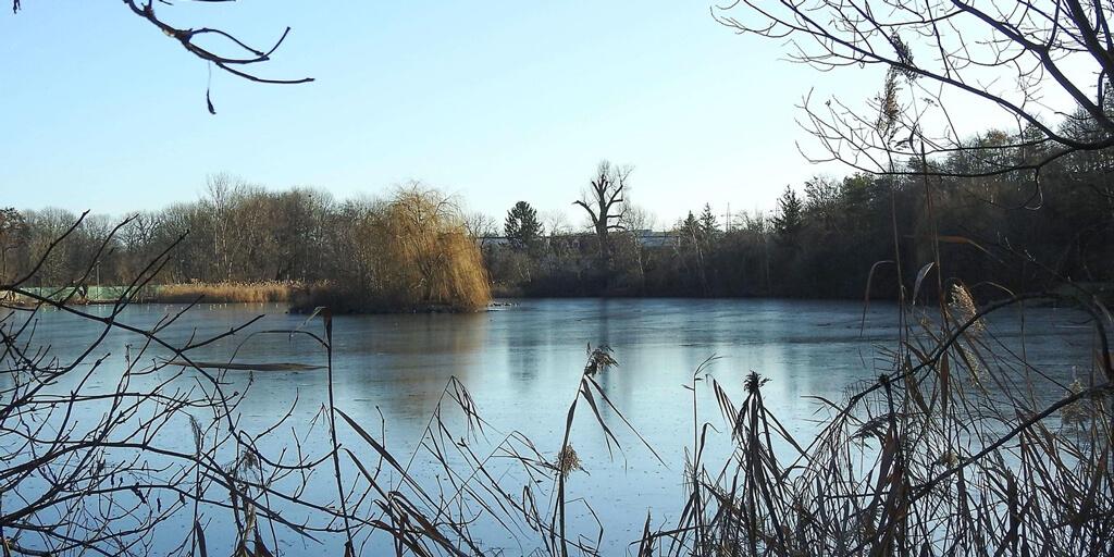 Hamerský rybník 3