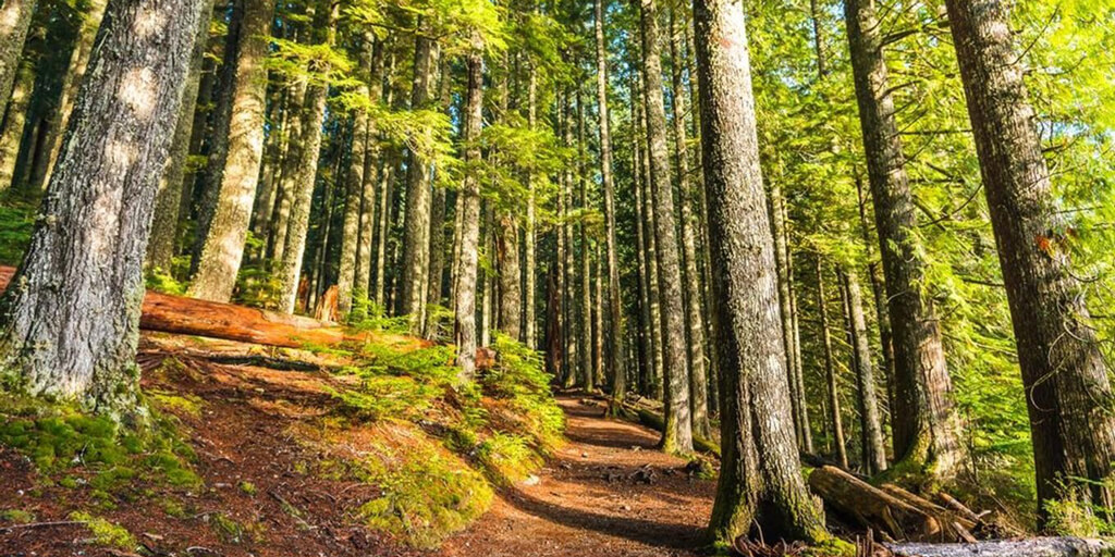 Krčský les 3