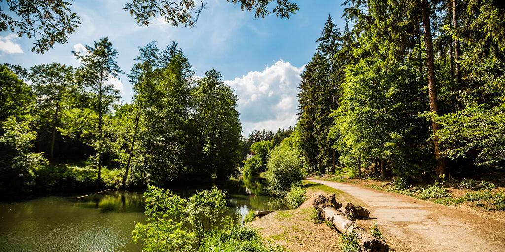 Krčský les 5