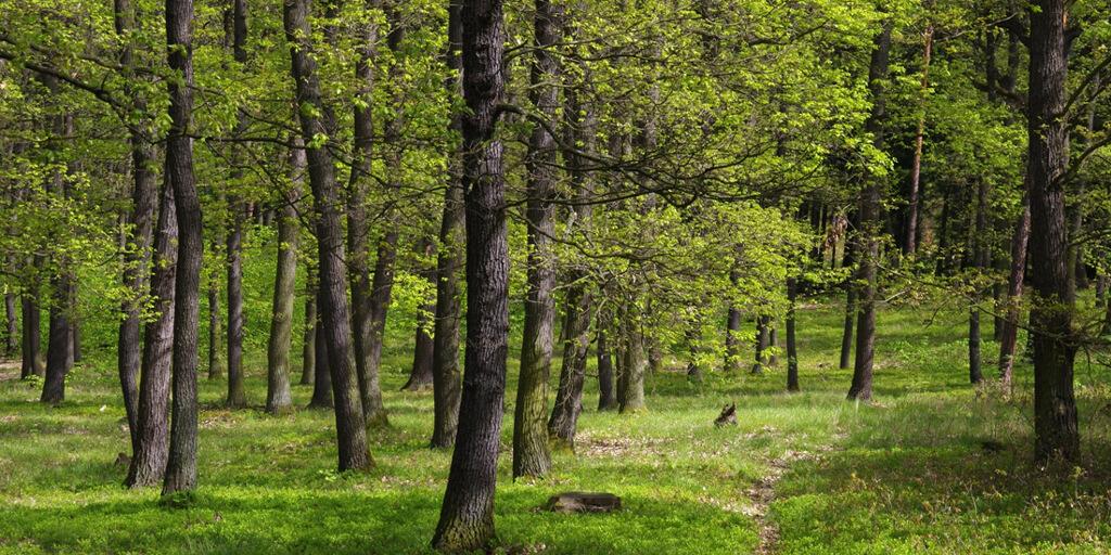 Krčský les 1