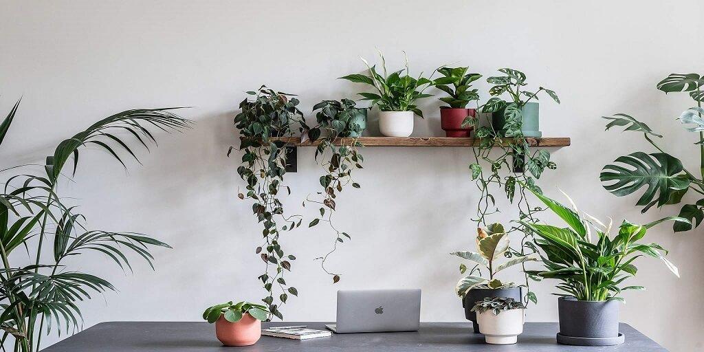 Kterými rostlinami obohatit svůj home-office_2