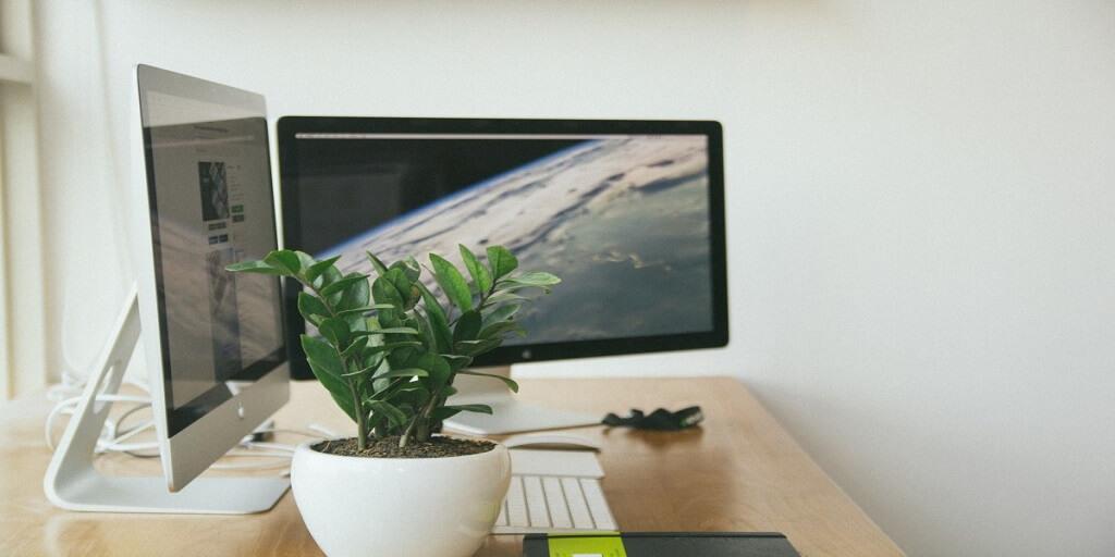 Kterými rostlinami obohatit svůj home-office_3