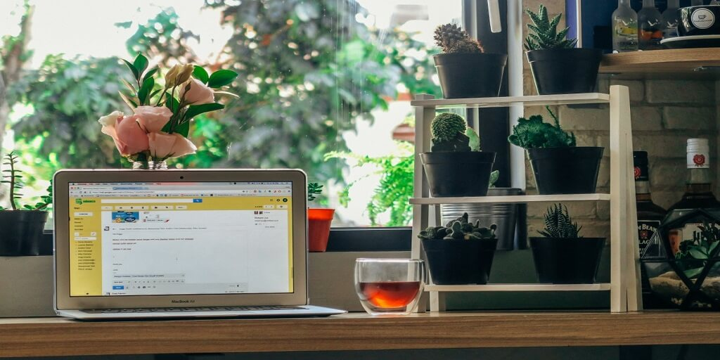 Kterými rostlinami obohatit svůj home-office_5