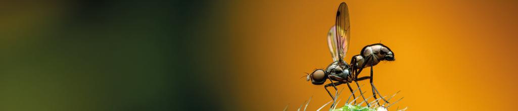 Myggnät, myggnätsdörrar, insektsbekämpning, skadedjurbekämpning