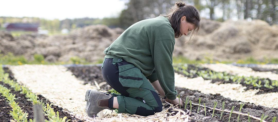 Kvinna sitter på knä på sina knäskydd och planterar purjolök
