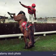 A horse falls during a national hunt race at kempton uk ad4j35 5b1 5d