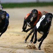 Greyhound galway1