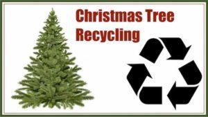 Christmas tree recycling 300x169