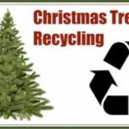 Christmas tree recycling 300x169