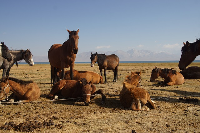 Kalandtúra a Tien-san, jurták és magashegyi tavak között: Kirgizisztán