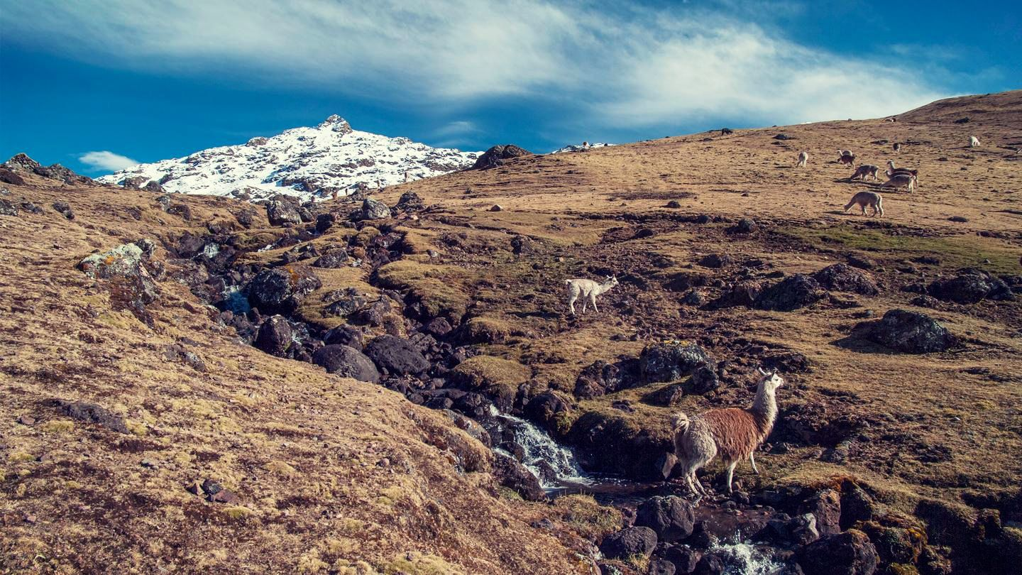 The Lares Trek Machu Picchu, Lares Trek, Peru #db189e56-76df-4e50-be26-0d0b0d548e8a