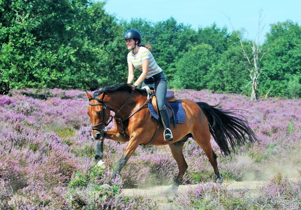 Horse Riding Tour (2-6 people) Amsterdam, Netherlands #fb686489-1aa1-41a4-939c-e2a36af1b4e9