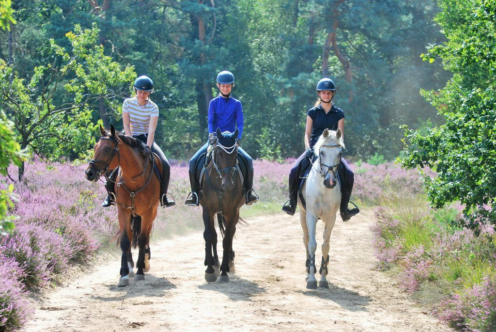Horse Riding Tour (2-6 people) Amsterdam, Netherlands