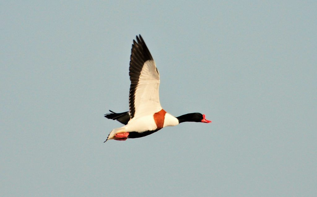 Full day bird watching tour Amsterdam, The Netherlands #d51a2afc-0f95-4f88-9b82-d8f8ff018566