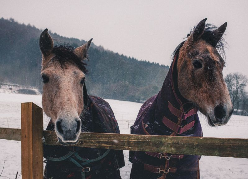 Full-day Winter Horse Riding in Bled Bled, Slovenia