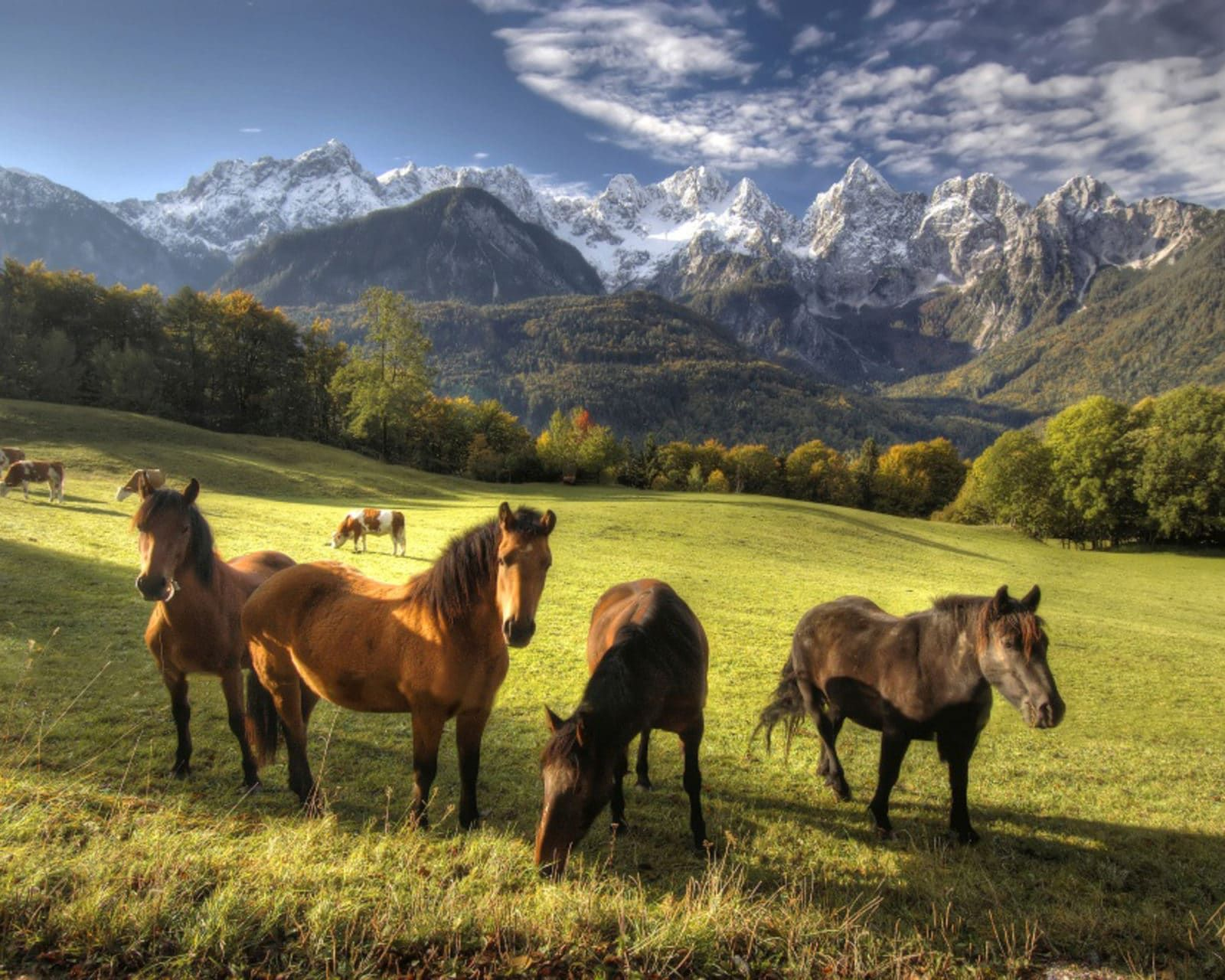 🐴 Half-day Horseback Riding in Bled Triglav National Park, Slovenia #73f9c83a-bf12-4c60-8981-dc78075be50b
