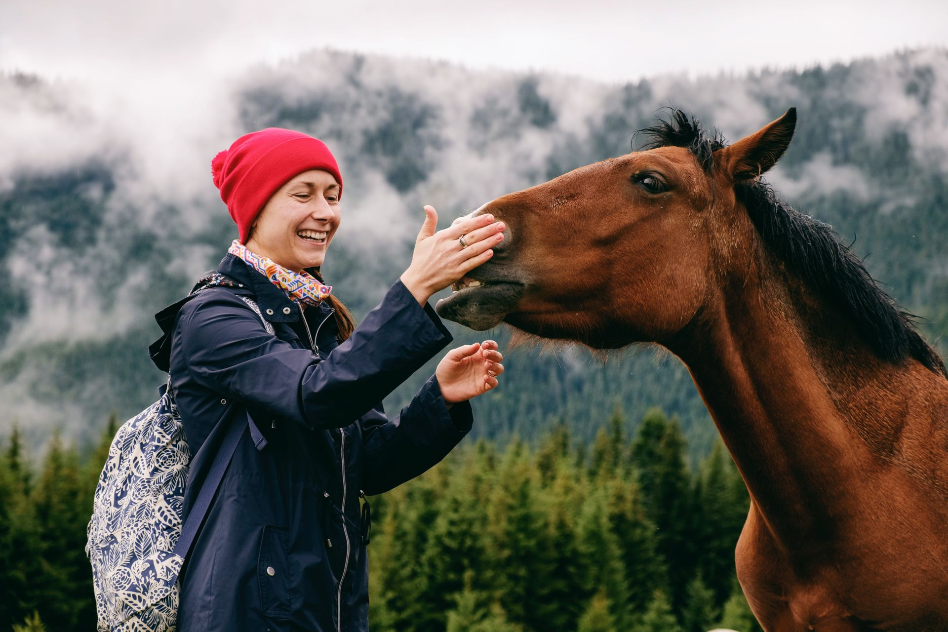 🐴 Full-day Horse Riding in Bled Bled, Slovenia