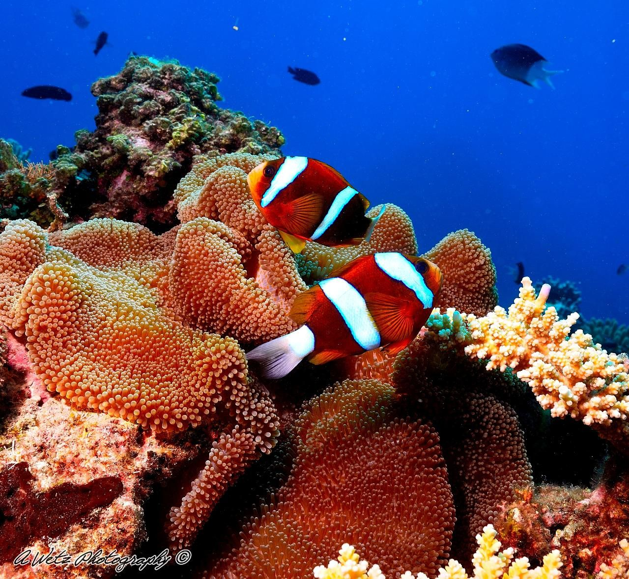 Great Barrier Reef Day Trip - Snorkeling or Discover Scuba Great Barrier Reef, Australia