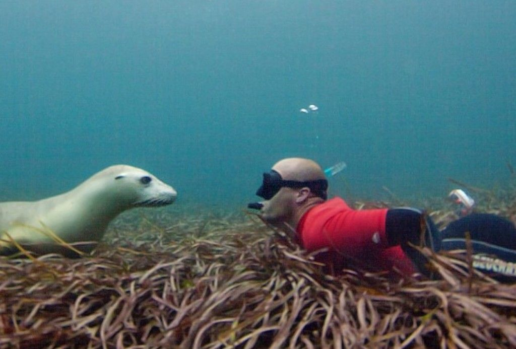 Swim With The Sea Lions Port Lincoln #a755feff-dfb7-48cf-abc4-882b06bd2061