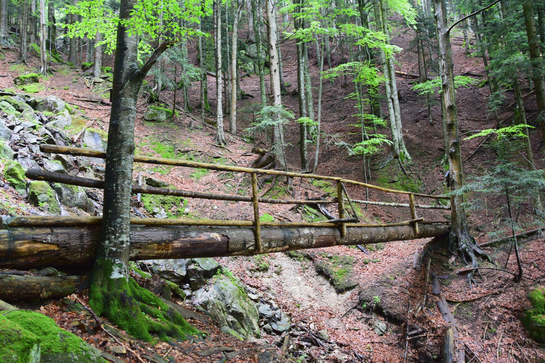 Szlovén Paradicsom Túra Szlovénia, Lobnica-patak völgye #5ba5cb7b-7b0d-4a1a-a1da-710b67553110