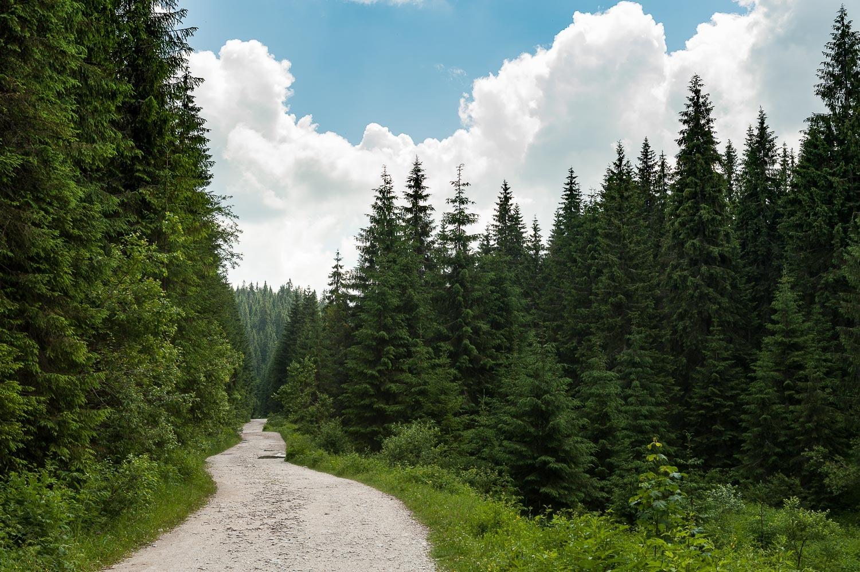 Bihar-hegység, Pádis-fennsík Bihar-hegység, Erdély, Románia #5ec8e1dc-67b0-41da-819d-ccc19ecbdc23