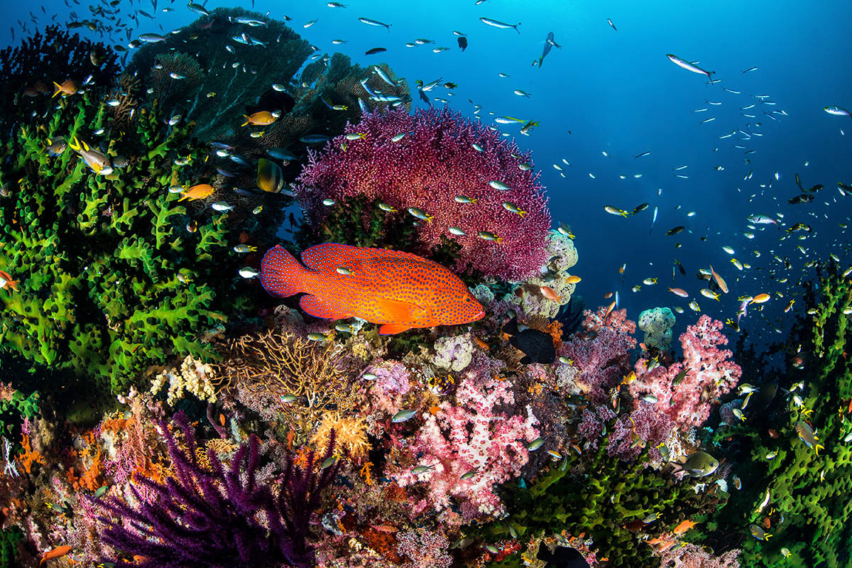 Komodo – Raja Ampat – Bali Indonézia #78fc07ce-e851-4cd7-b21d-ba889371721d