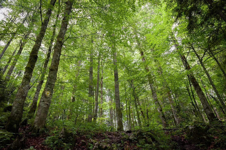 Bihar-hegység, Pádis-fennsík Bihar-hegység, Erdély, Románia #9c954bc5-92b3-460d-b352-4137d214911b