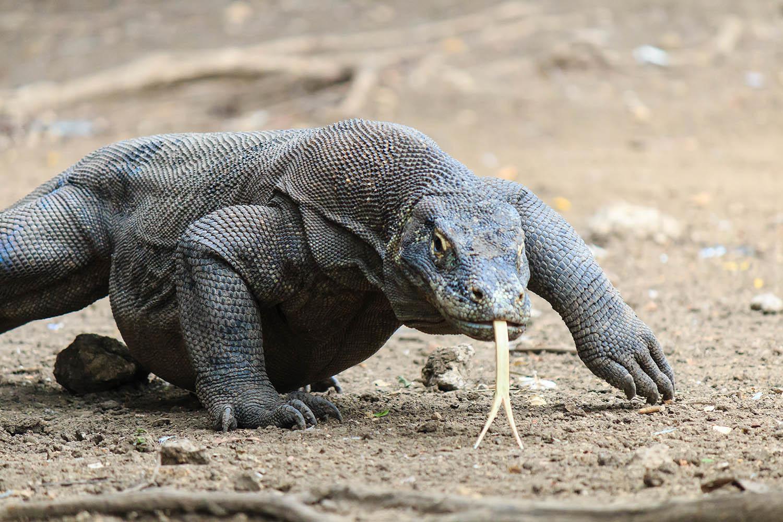 Komodo – Raja Ampat – Bali Indonézia #57095275-ef93-43b2-b199-348fca5cfe51