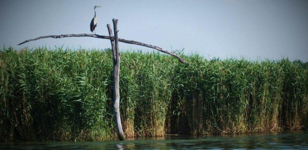 Tisza-tavi hétvége pünkösdkor Tisza-tó, Magyarország
