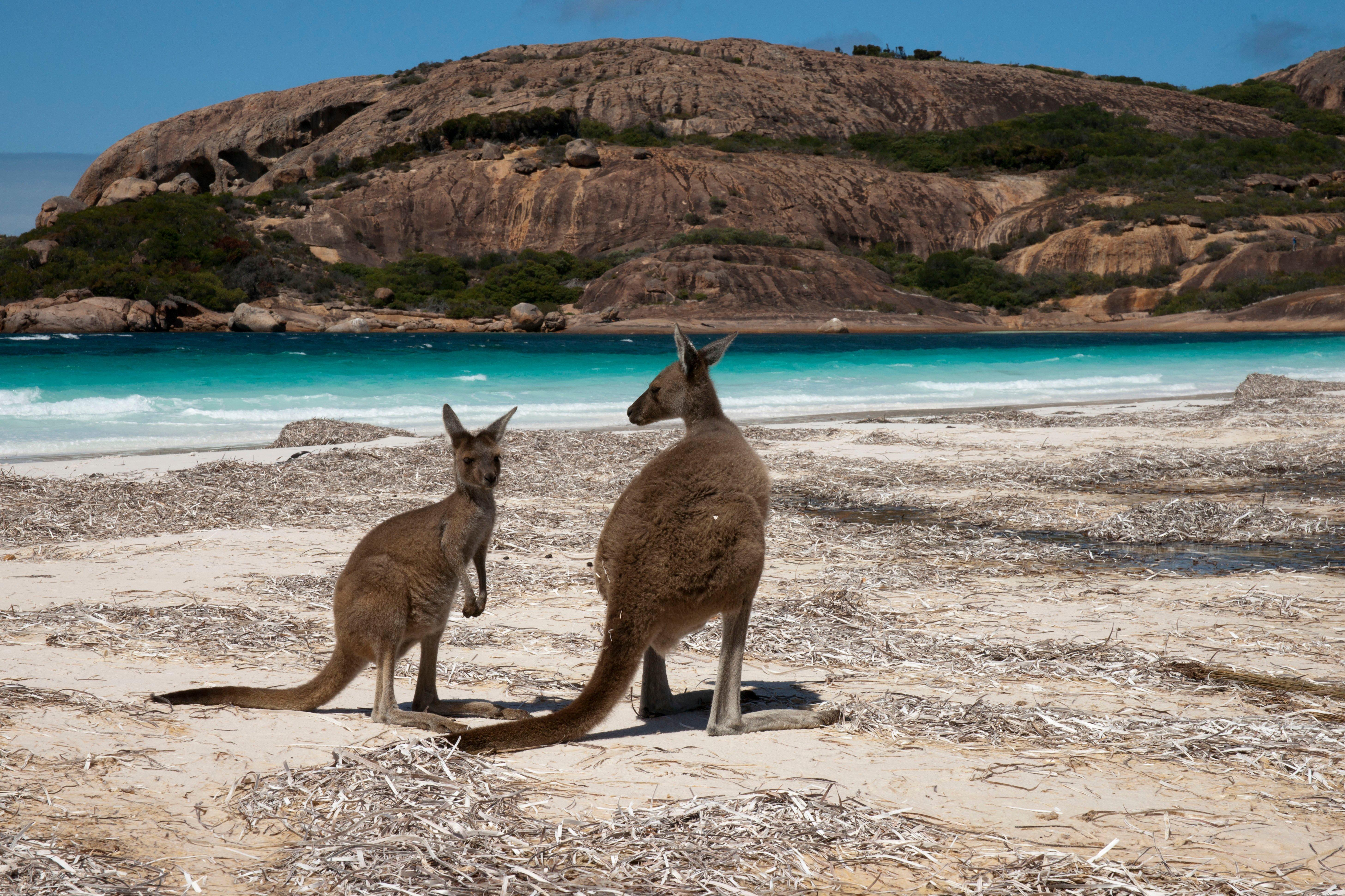 Nyugat-Ausztrália Körutazás Nyugat- Ausztrália #cecab018-824c-49c6-a924-dd47f0adb004