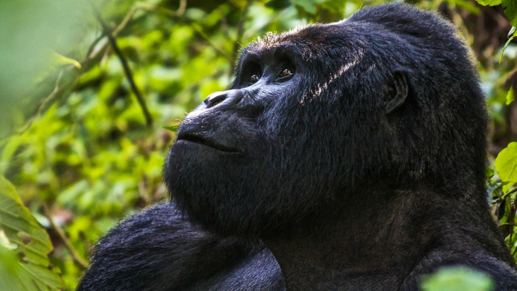 Uganda & Gorillas Overland Uganda
