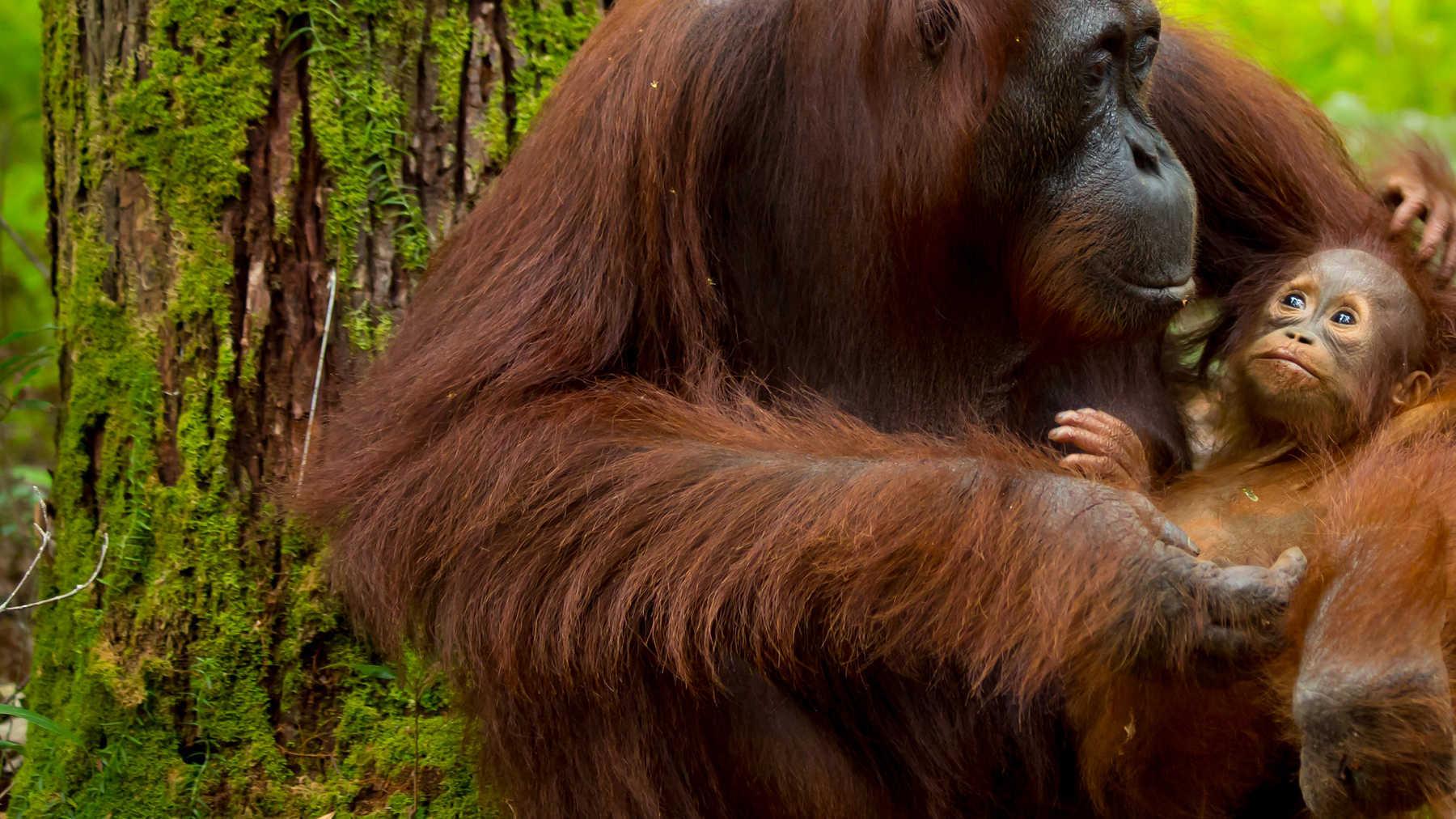 Experience Borneo Sabah, Malaysia