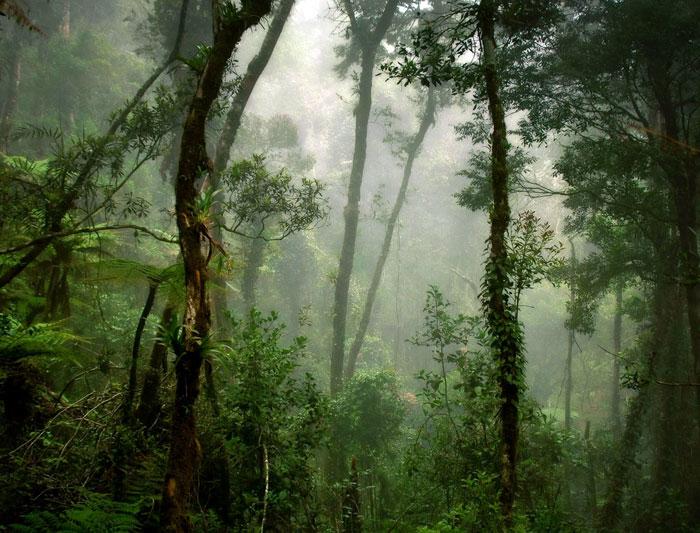 Best of Borneo Borneo