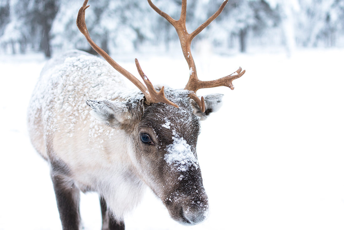 Finnish Lapland in Winter Yllästunturi , Lapland, Finland