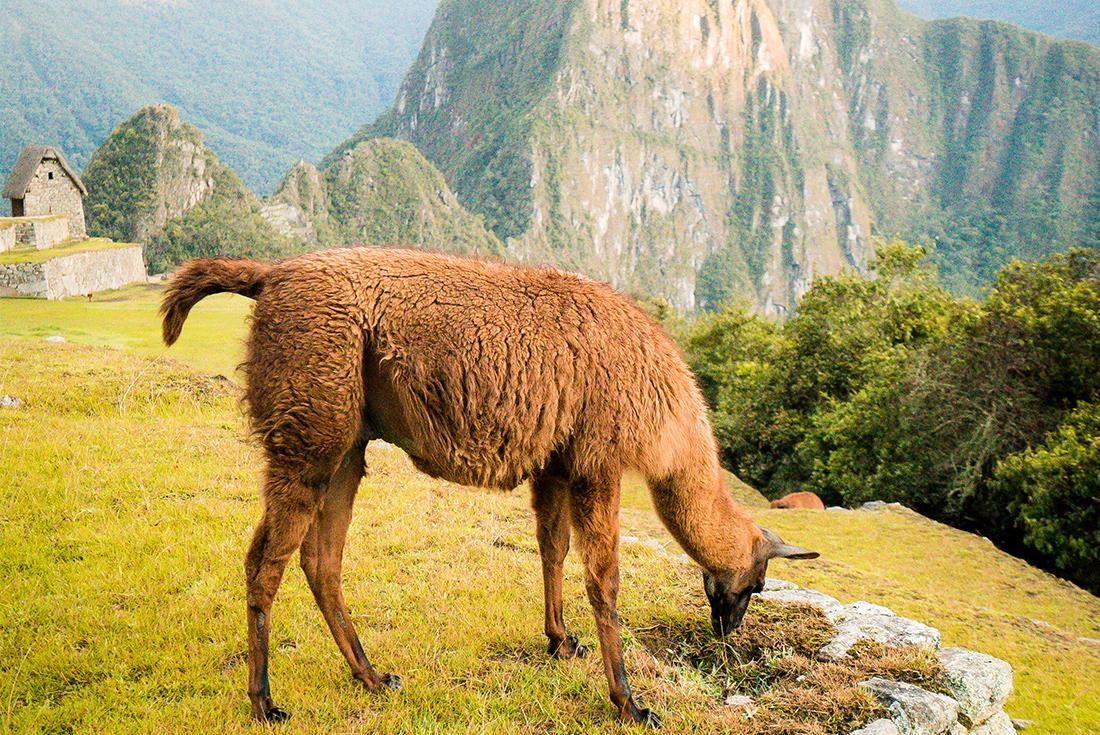 Six Days on The Inca Trail Machu Picchu, Inca Trail, Peru #7928f2a7-24a9-4701-8ed1-1a8a38726bf7