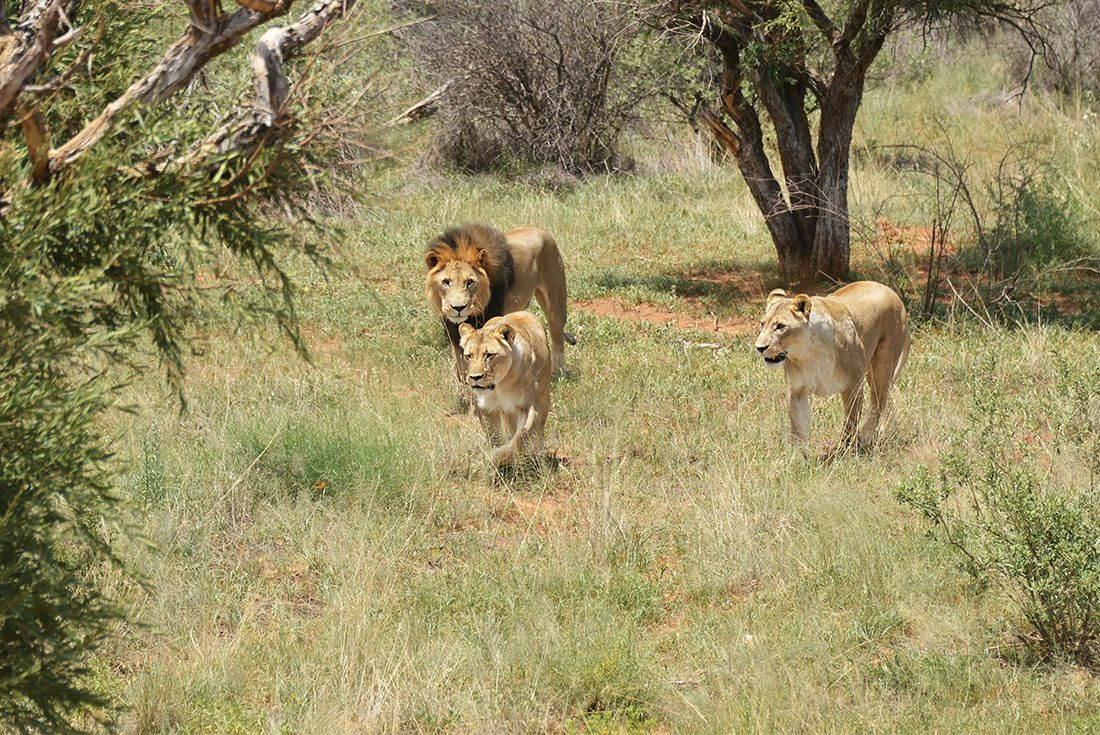 South Africa Expedition: Kruger Walking Safari South Africa