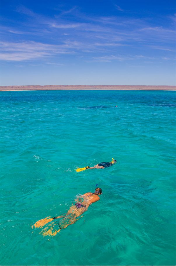 Ningaloo Whale Shark Swim & Eco Tour Ningaloo Marine Park, Exmouth, Australia #140bba28-e03e-4a0e-a89c-a8bed6c1cd3c