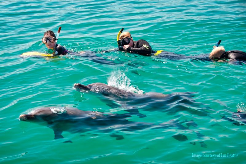 Swim with Wild Dolphins Perth WA, Australia #aaaa3be0-aed8-49bb-87a5-314807f30e2c