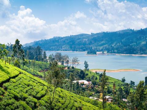 Explore the beautiful island of Sri Lanka on a 12-night tour