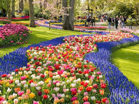 Beautiful flowers in Keukenhof Park Holland