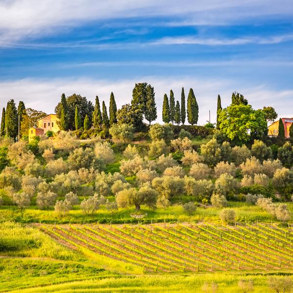 A Tuscan hillside in Italy