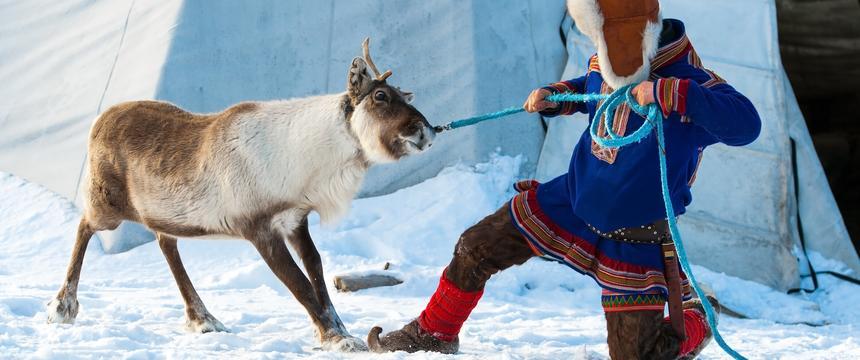 A reindeer breeder in Norway