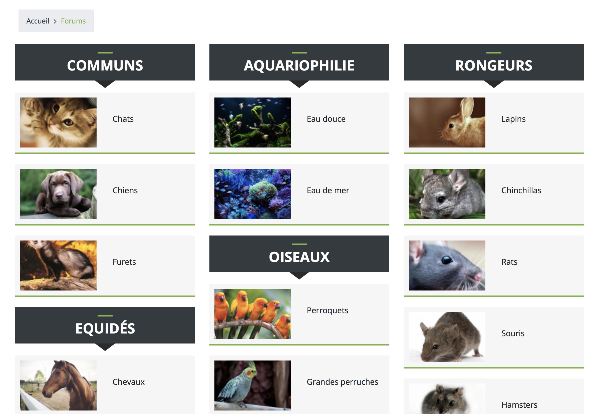 Les différents forums pour chats, chiens, furets, souris, rats, reptiles...