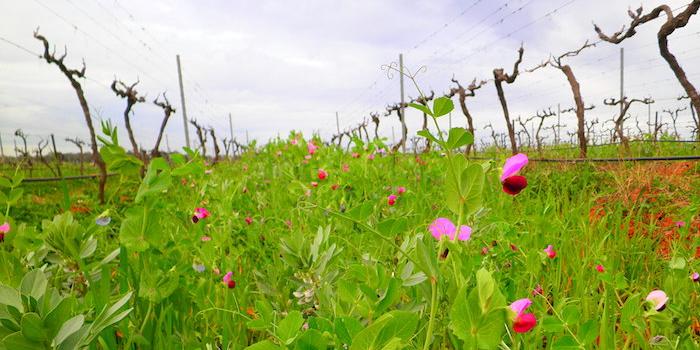 vintips-eko-rose-vinbanken