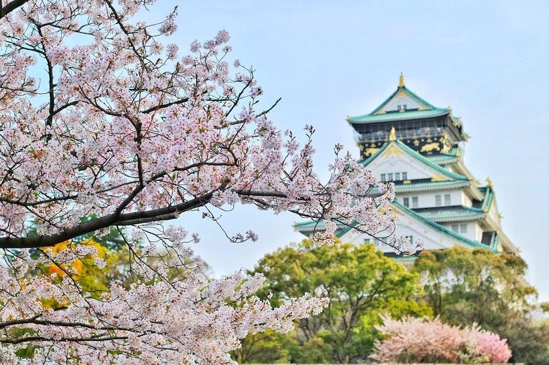 vad-ar-sake-vinbanken-close-up-photography-of-cherry-blossom-tree-1440476