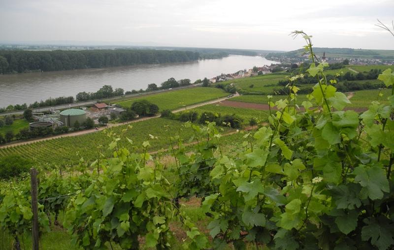 rheinhessen-tysklands-storsta-vindistrikt-vinbanken