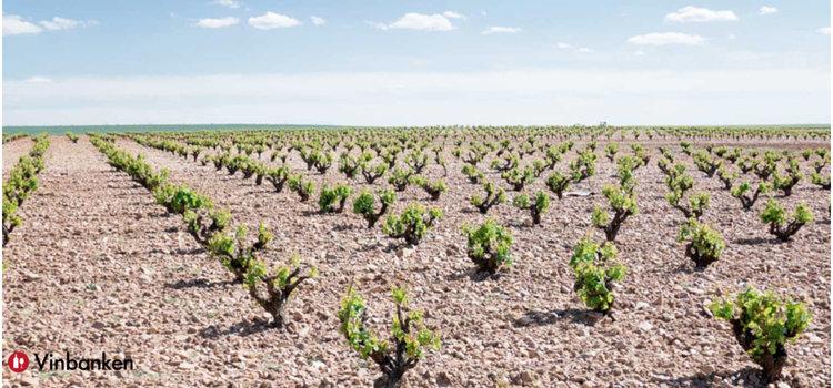 vinregionen-toro