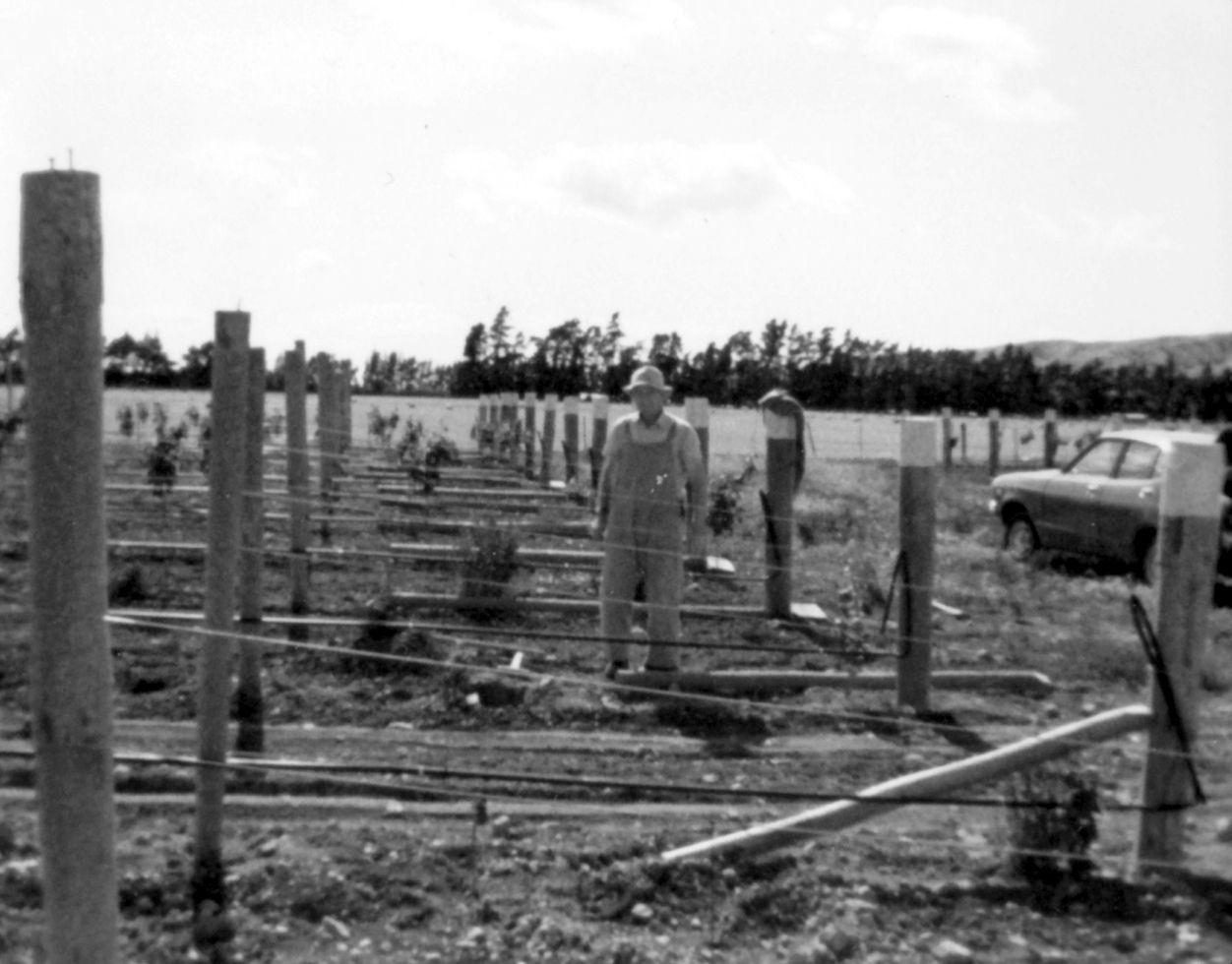 saint-clair-family-estate-vinbanken-vineyard-early-days