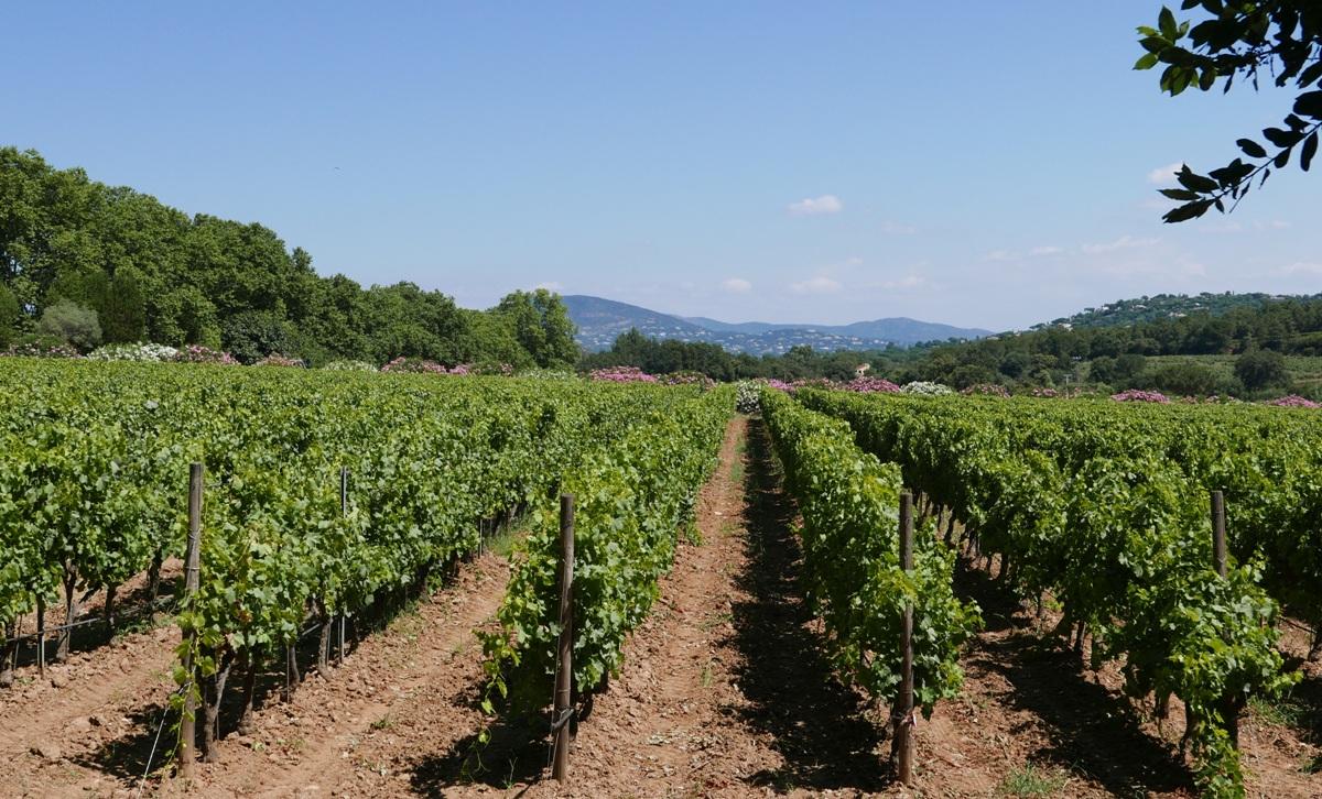 aldsta-vingard-chateau-minuty-vinbanken