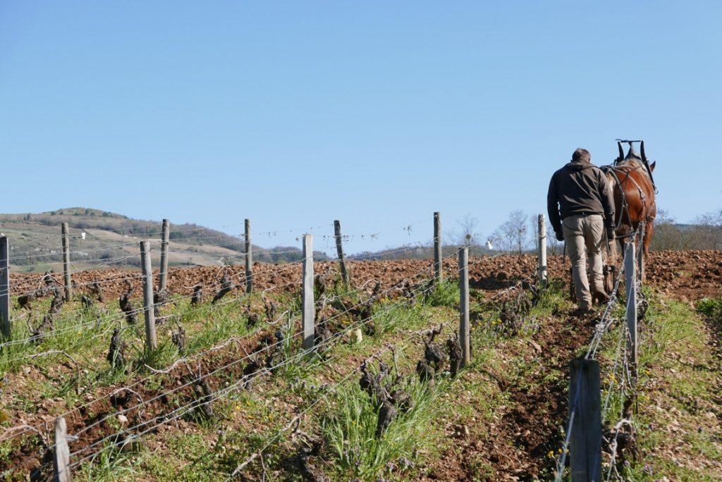 domaine-chevrot-et-fils-maranges-organic-vinbanken